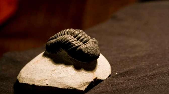 Ammonites and trilobites, oh my!