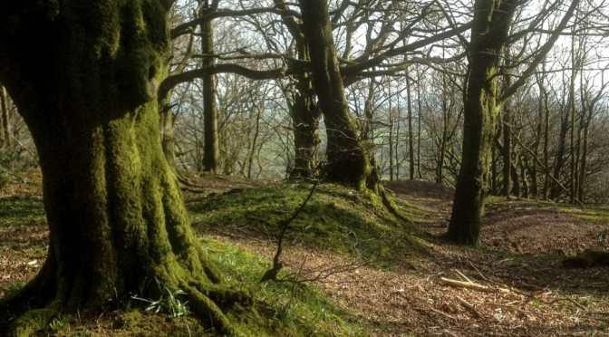 Wells – Maesbury Castle – Beacon Hill – Fosse Way – Shepton Mallet