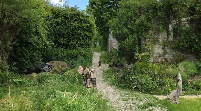 Walking through a permaculture garden