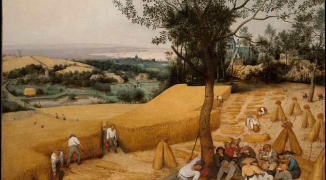 Medieval farm illustrations of my farming experience