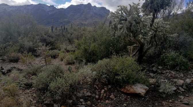 Sweetwater trail, AZ