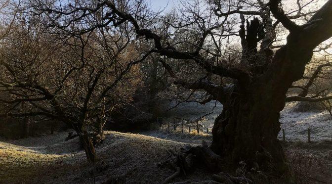 Frost Magic