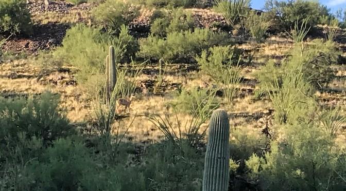 Almost home: Tucson Mountain Park