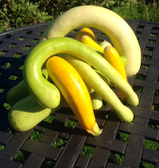 photo-of-courgettes