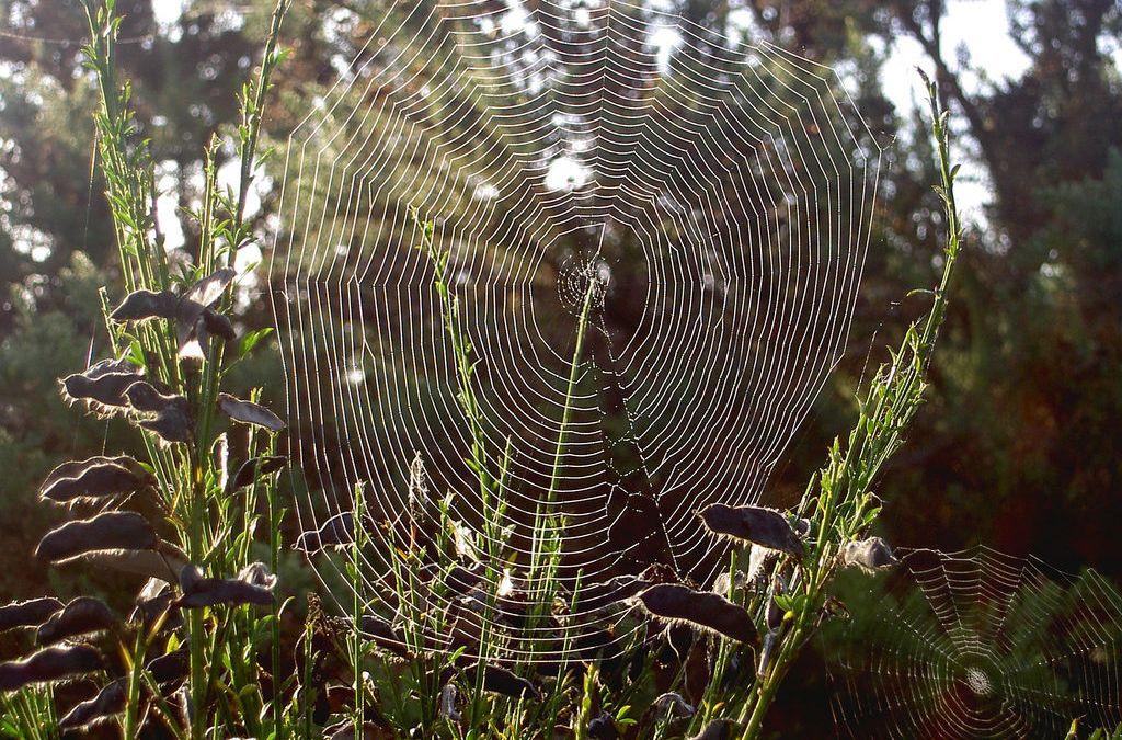 10 Essentials When Writing Web Copy