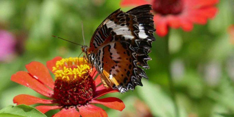 https://www.writteninwaikiki.com/letter-from-my-17-year-old-self/ butterfly on flower