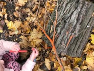 Colouring twigs