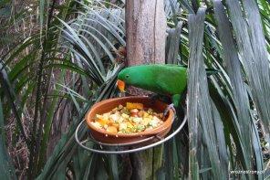 Papuga w Loro Parque