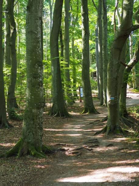 Droga przez Woliński Park Narodowy