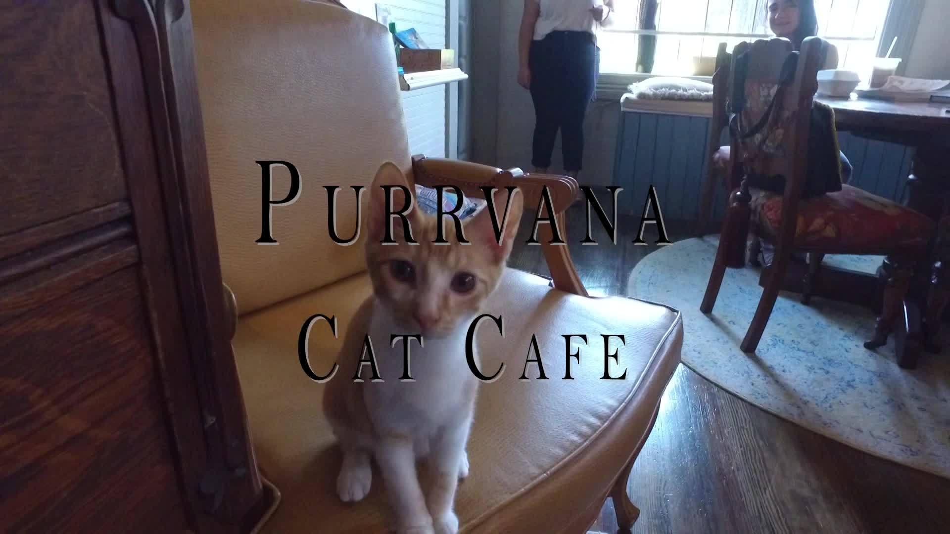Purrvana_Cafe___Cat_Lounge_0_20180905182902