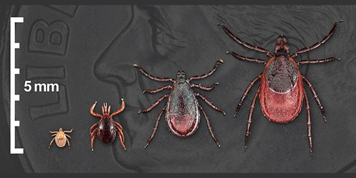Outdoor warning: ticks, Lyme disease and 3 poisonous plants increasing in Alabama