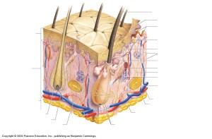 Gentry, Teresa M  Anatomy Diagrams