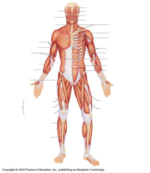 Gentry Teresa M Anatomy Diagrams