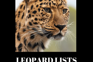 Dawud Islam - Leopard Lists Download