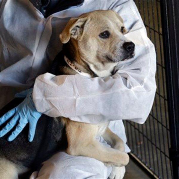 Animal Shelter Rescue_128572