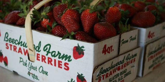 strawberries_166588