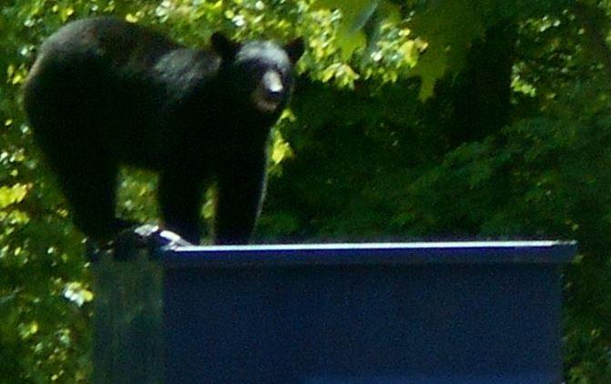 bear pic cropped_179216