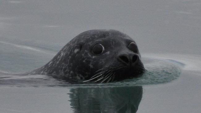 seal_235945