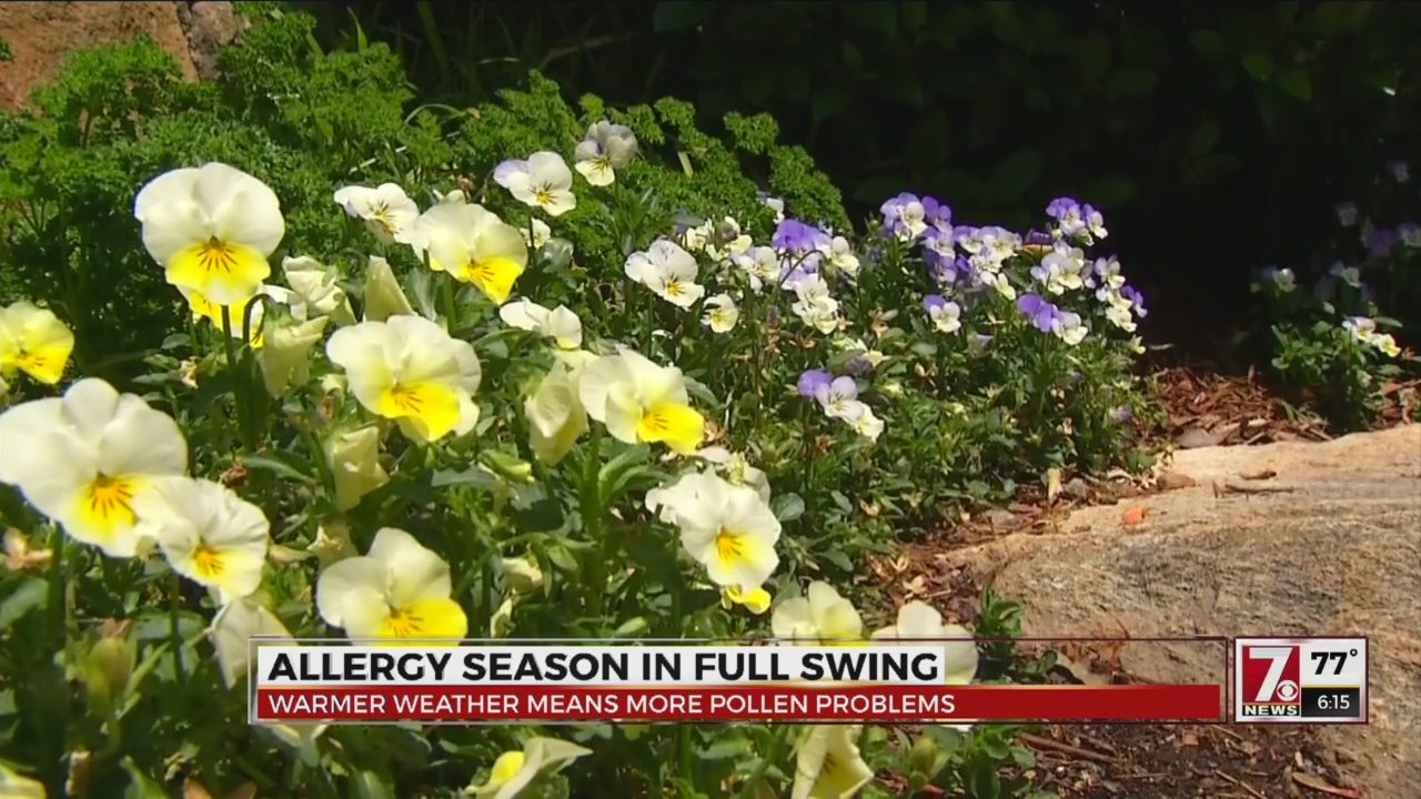 Upstate Spring allergy season could last longer than normal