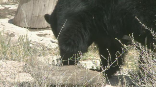 bear_394211