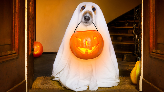 Halloween Ghost Dog Trick Or Treat_479843