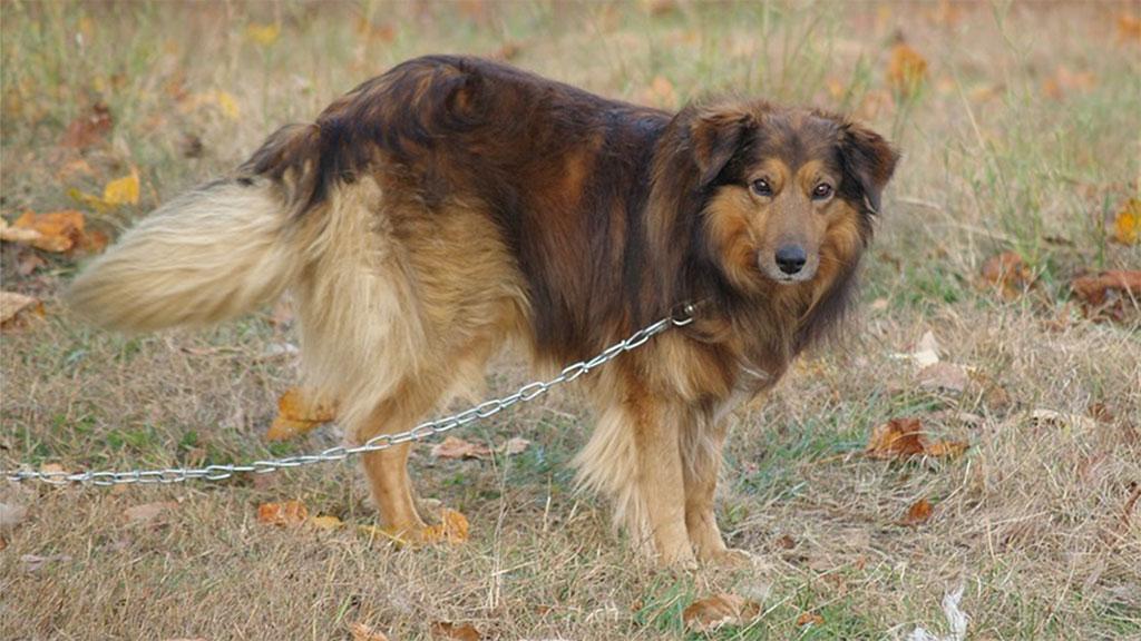 dog-chained_1538584121011.jpg