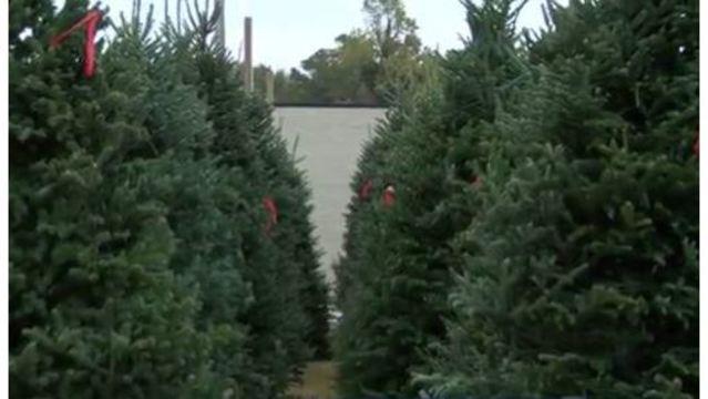 generic-christmas-tree-lot_36172612_ver1.0_640_360_1543442335620.jpg