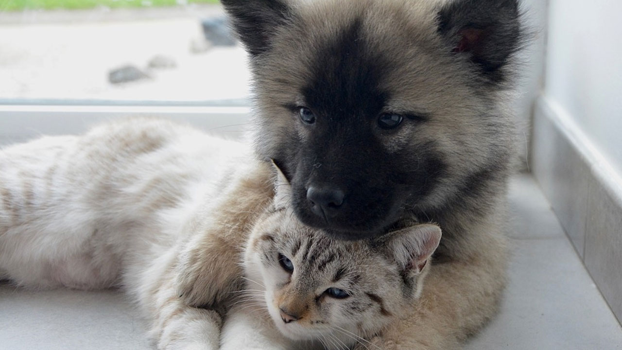 dog cat generic_500975