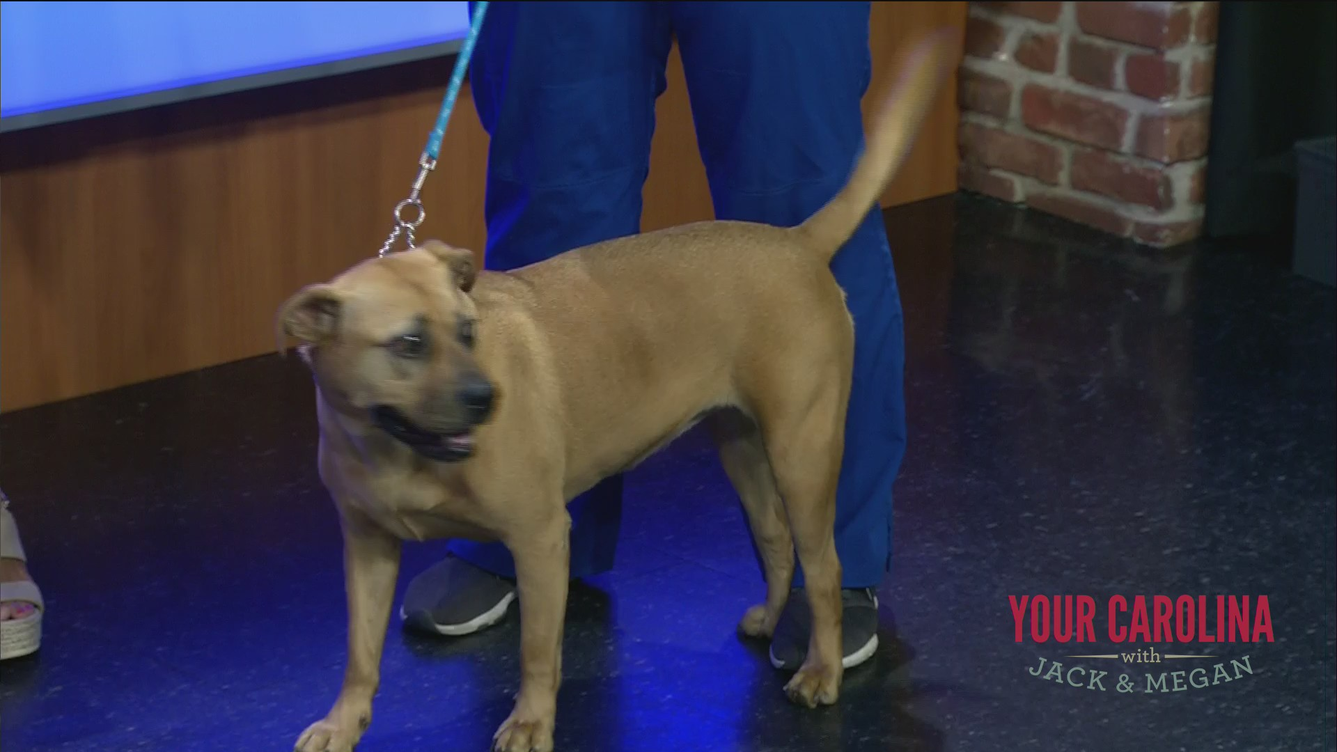 Furry Friend Friday With Greenville County Animal Care