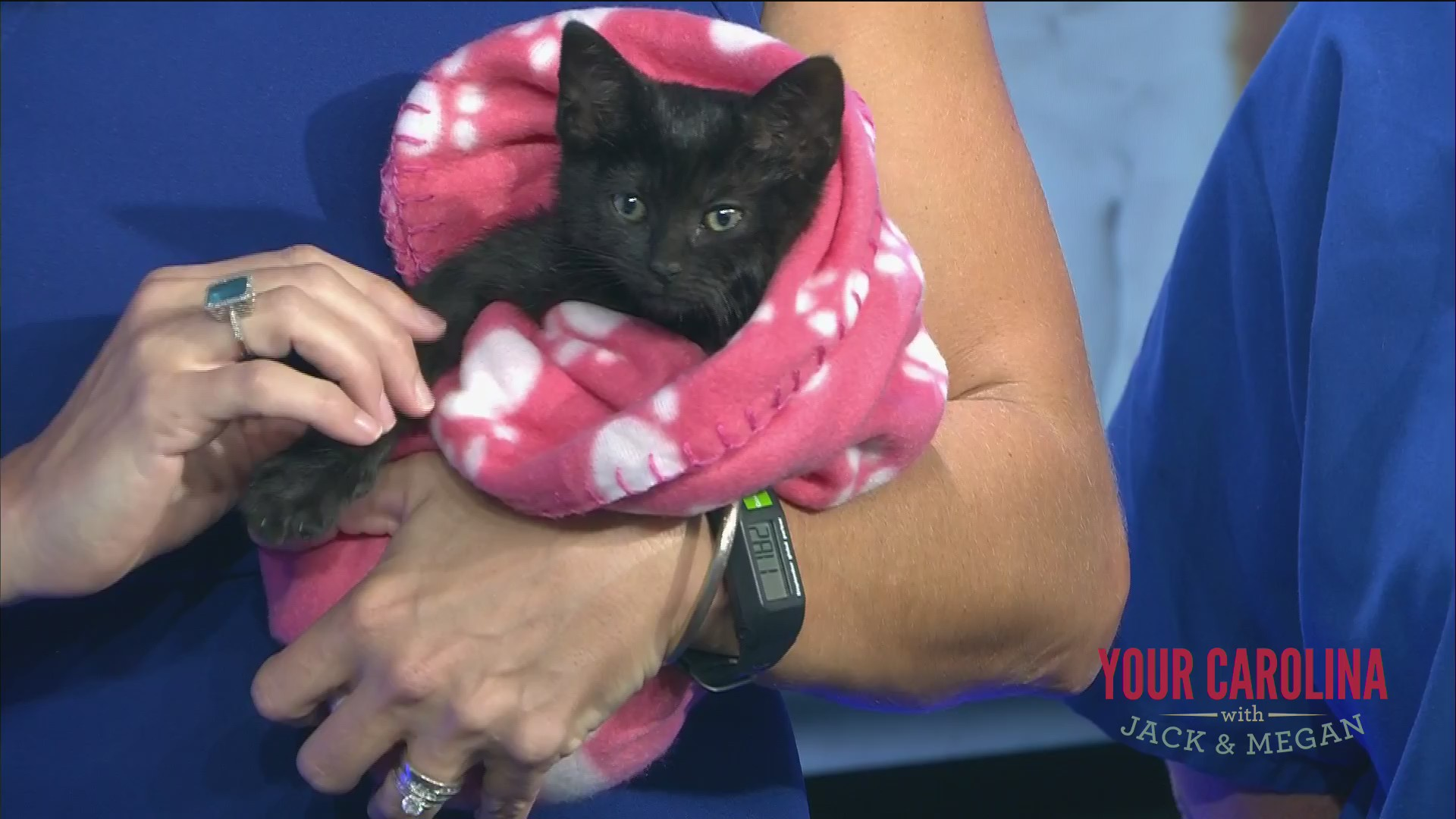 Furry Friend Friday - Meet This Cute Kitten