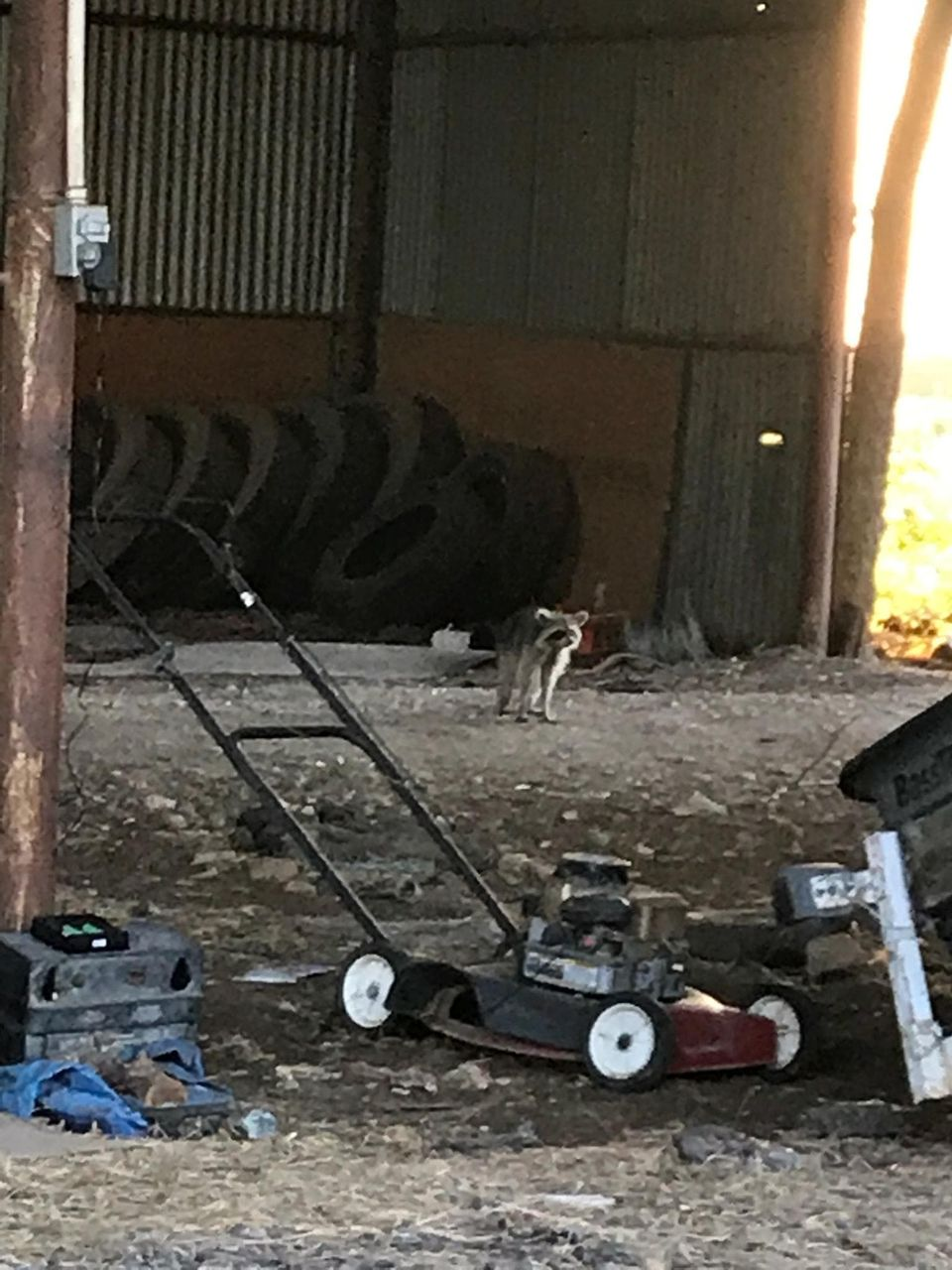 Carol took this photo of the inside of the barn where she lived for two weeks