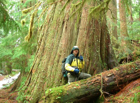 A hiker outfitted for wet weather poses next to a giant cedar on the Goat Lake Trail. Photo by Kim Brown.