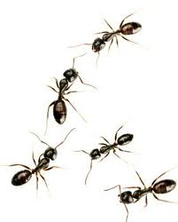 Pic At 6abmetal Ant Killer With Abamectin 7