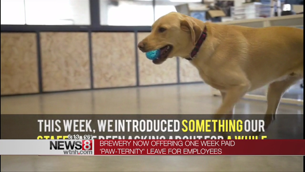 """Brewery offering one week """"Paw-ternity"""" leave for employees"""