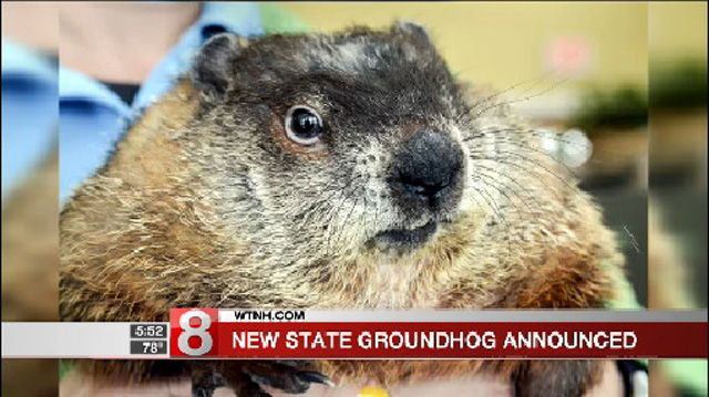 2017-05-17 Chuckles the Groundhog 2_453346