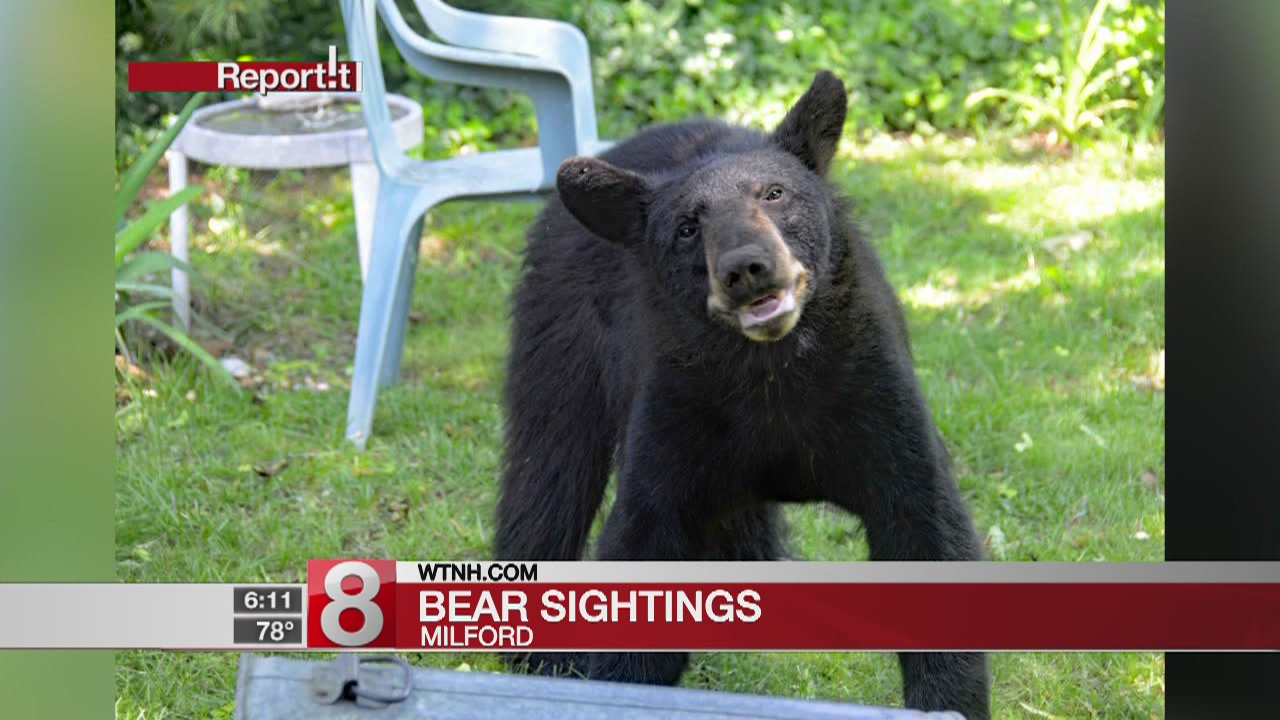 Recent bear sightings in Milford leads mayor to issue alert