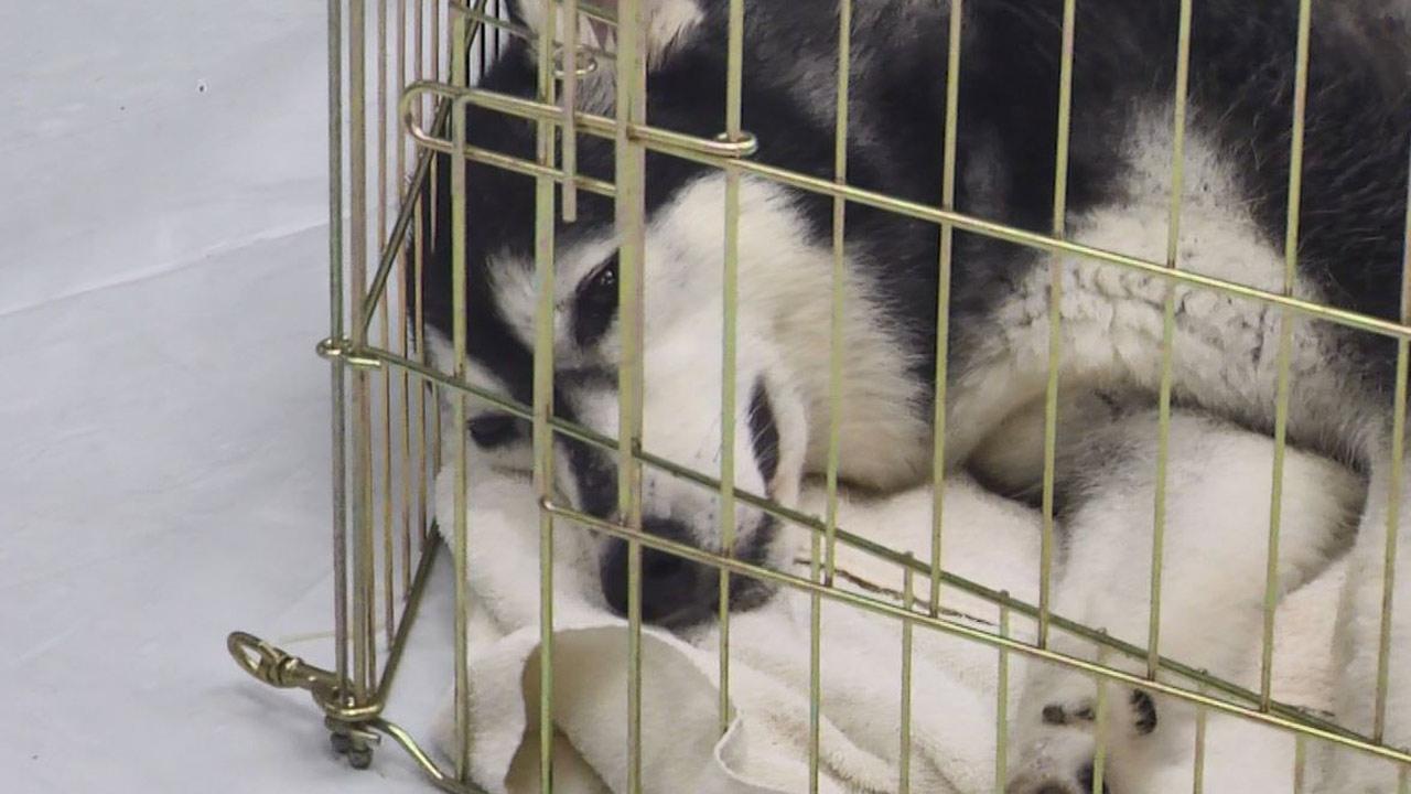 dog-mom-irma_524530