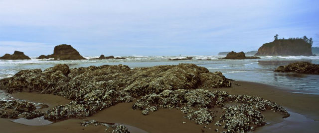 beach-washington-gty-er-180205_31x13_992_615928