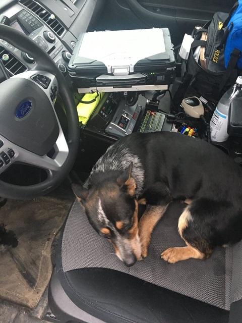 dog_I691_state police_638044