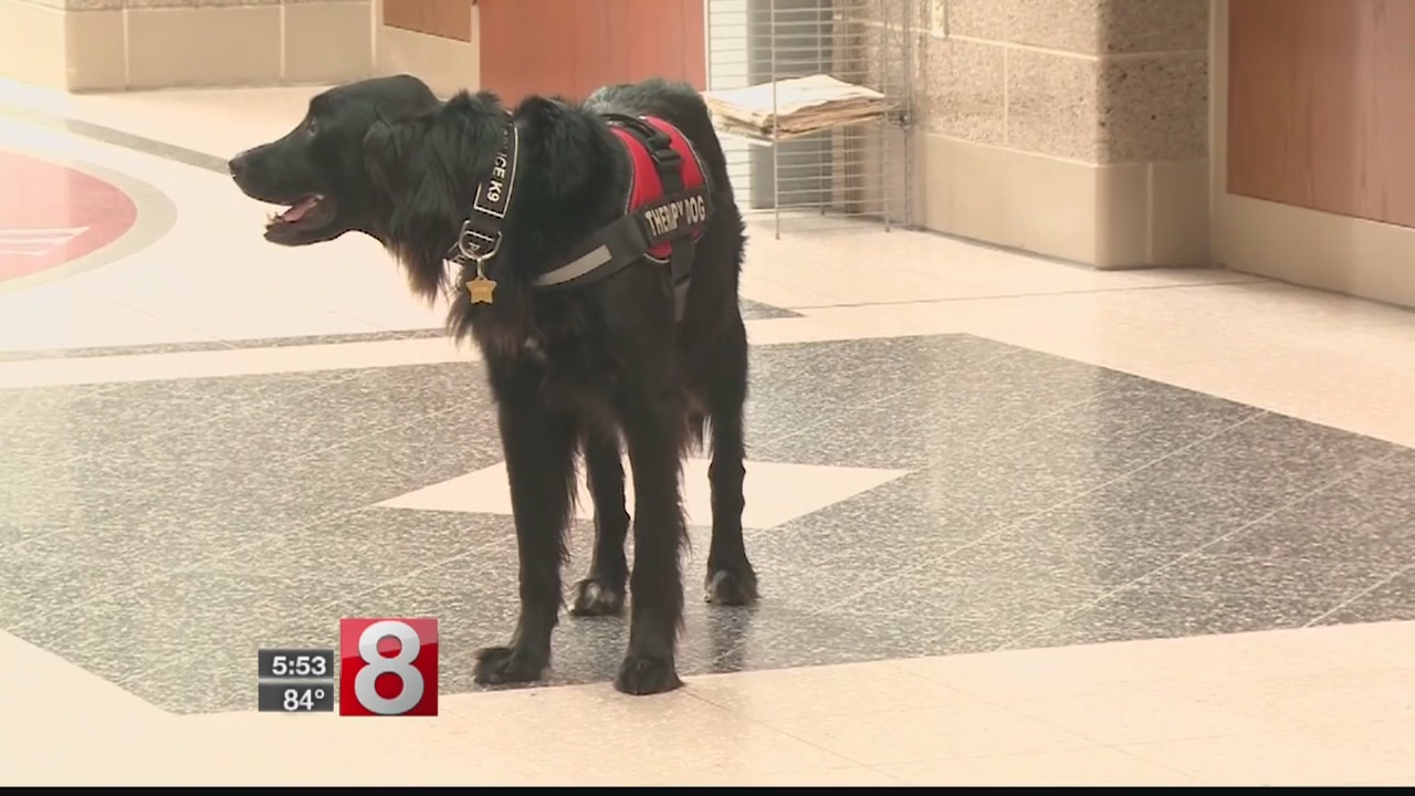 Therapy dog joins students returning to school in Wisconsin