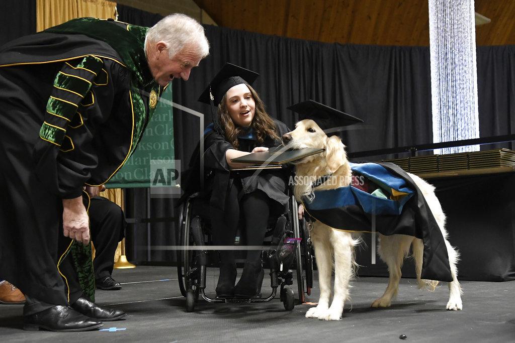 Dog Diploma_1545116885087