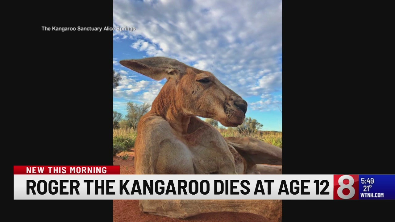 Roger the kangaroo dies at age 12