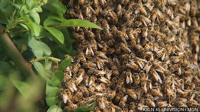 2016-05-16 Bees_284114