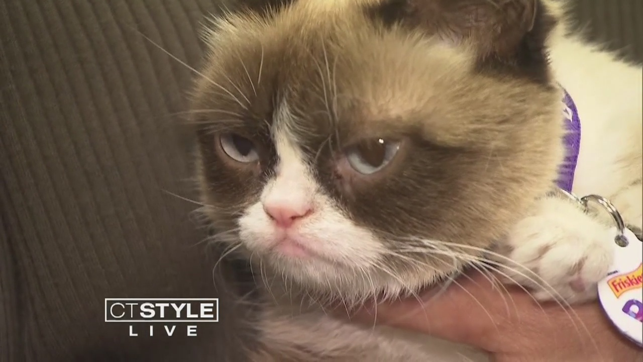 Today's Dish: Remembering Grumpy Cat