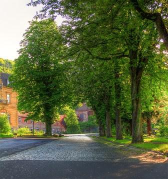 Die prächtige Auffahrt durch einen wunderschönen alten Baumbestand.