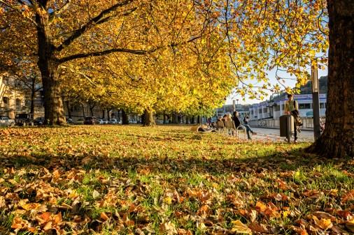 Herbstwetter am Main