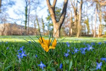 Gibt es ein besseres Anzeichen für den Frühlingsanfang als blühende Blausternchen und Krokusse?
