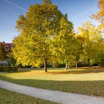 Traumhafte Farben und schöne Baumbestände im kleinen Parkabschnitte, links der Residenz. Ich bin mir gar nicht sicher, ob dieser Bereich offiziell überhaupt zum Ringpark zählt...