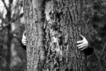 """Ein Baum zum """"lieb haben"""""""