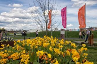 Blumenpracht auf der Landesgartenschau.